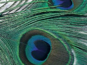 Peacock Eye Tops