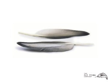 Mallard Duck Wing Quills Grey