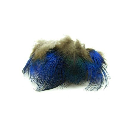 Blue Peacock Neck Feathers