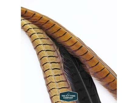 Cock Pheasant Tails - Dyed or Natural