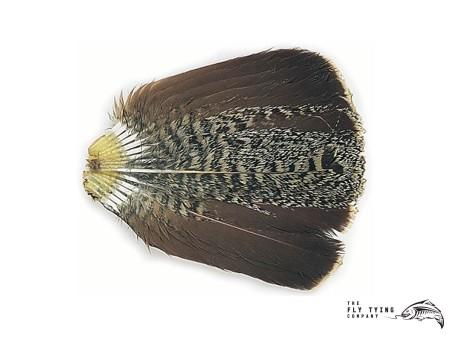 English Greg Partridge Tails