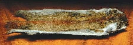 Pine Squirrel Skin