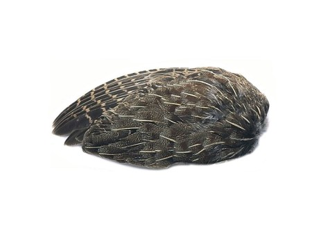 English Partridge Wings - Pair