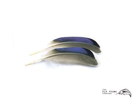 Mallard Duck Wing Quills Blue White Tip