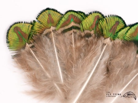 Veniard Peacock Gold Body Feathers