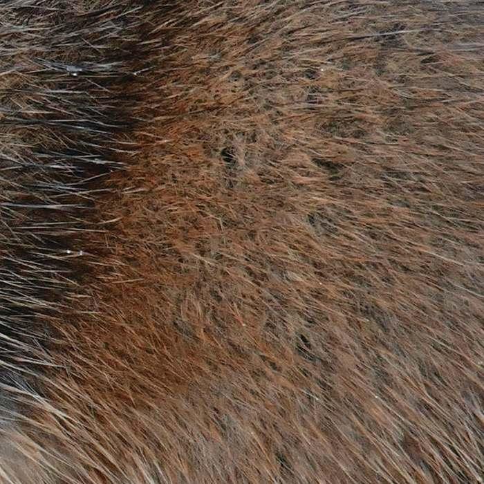 Muskrat Fur